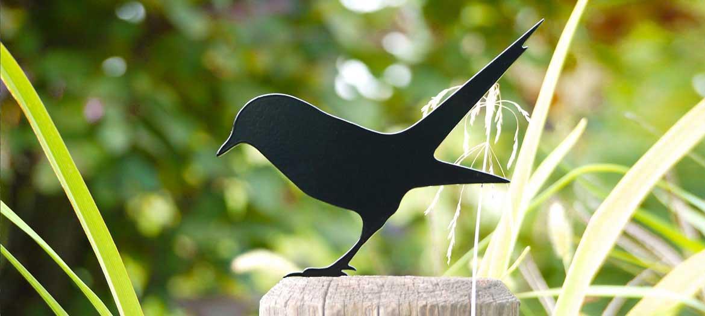 Bird Seeks Worm