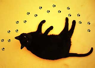 Cat Paw Prints Stickers, Cat Lover Gift for Floor or Wall Stickers