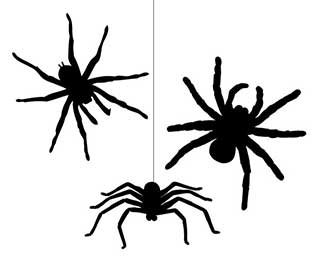 Spider Wall Stickers